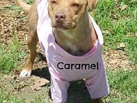 Caramel's story CARAMEL is approx. 3 years old and is a