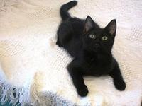 My story Meet Carbon - she is a sweet laid back gal who