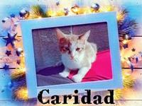 CARIDAD's story MY NAME IS CARIDAD AND I AM 4 MONTHS AS