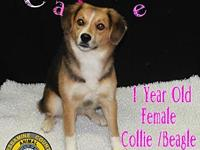 Carlie's story You can fill out an adoption application
