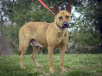 CARLINA is a sweet young Shepherd-mix who is 2 years