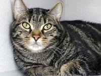 My story Carlo is a dignified reserved young man. He