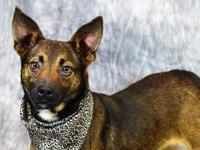 Sweet Carlo is a two-year-old Terrier mix that came to