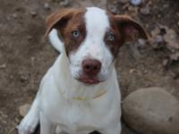Carlos is a 3-4 month old mix breed pup. He is a happy