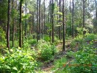 Wooded 58 acre recreational property located in