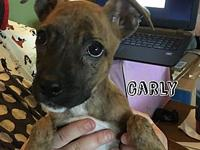 Carly's story Meet Carly, she is a sweet twelve week