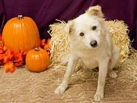 Carly's story Adoption fee for dogs is $95.00 which