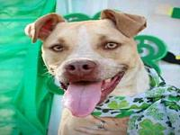 CARLY's story Carly is a 1 year old mix breed dog. She