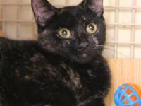 Carly: Spayed Female, Tortie Coloring, 8 Months Old Cat