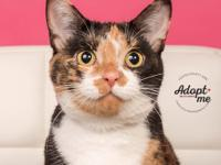 Carmella is a sweet and affectionate girl who is ready