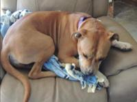Carmen needs a foster home. We would love to bring her