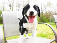 Carmen is a 12 week old lab mix puppy, she was found in