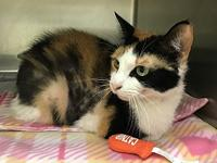 Carmina's story Carmina is a beautiful, female calico,