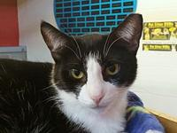 Carmine's story I came to Cat Depot because my owner