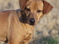 CAROL's story MEET CAROL! A 10-12 month old, female,