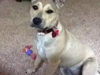 Carolina Dog - Elvira - Medium - Young - Female - Dog