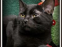 My story Carrie is a playful, energetic little girl who