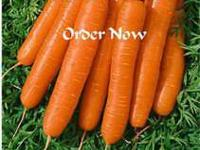 Carrot Scarlet Nantes Heirloom seeds, Order now and get