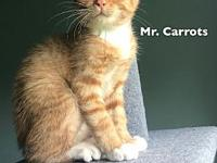 Carrots's story Mr. Carrots was found on the side of a