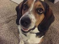 Carson's story Carson is a three year old Beagle. He