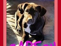 CARSON's story Please contact Jenny Cope