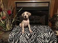 Carson's story Very sweet playful puppy good with