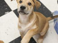 NOTE: ADOPTION DONATION FOR PUPPIES 6 MONTHS OLD AND