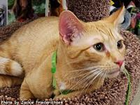 Carter's story Meet Carter! He's an orange tabby, about
