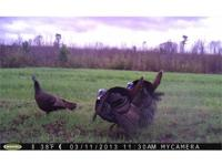 food plots, interior roadways, dove fields and duck