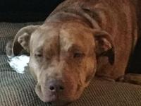 My story Adult Pit Bull TerrierCas is a 2 1/2 year old