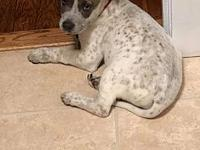 Cash's story My name is Cash! I am 8-10 weeks old. Im a