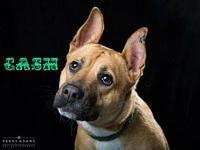 CASH's story Cash is a great young dog who brings such