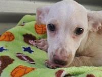 Cashew's story At Wags and Whisker's Pet Rescue: