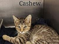 Cashew's story Sullivan County Animal Shelter  380