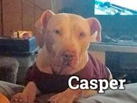Casper's story You can fill out an adoption application