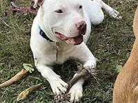Casper's story I am looking for my forever home. I love