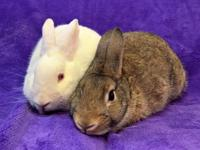 This adorable spayed and neutered male / female bunny
