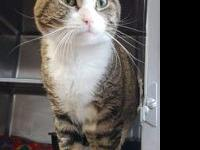Casper's story 2 years old Domestic Shorthair Neutered