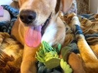 casper is a male Lab mix weighing at 19lbs, and is