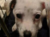 Casper pup's story Please complete our application at: