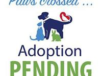 Casper's story Please call  or email