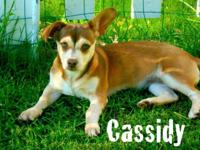 Cassidyeis a beautiful, playful and energetic female