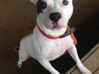 Cassie's story !!!Not Currently Available for
