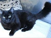 Cassie's story This silky beauty is Cassie! Found as a