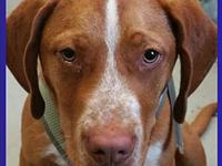 Cassius's story Did you know when you adopt one dog you