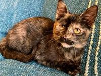 My story Castrol is a beautiful little Tortie. She