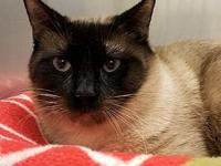 Cat Cage 16's story Male Siamese Mix Owner surrendered