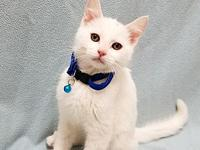 Cat-man-du's story Available for Adoption!