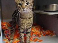Cat Nip's story New Arrival!  A beautiful, PLAYFUL