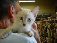 we have many kittens available for adoption (including